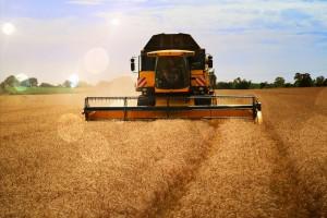 Mezőgazdasági termeltetés